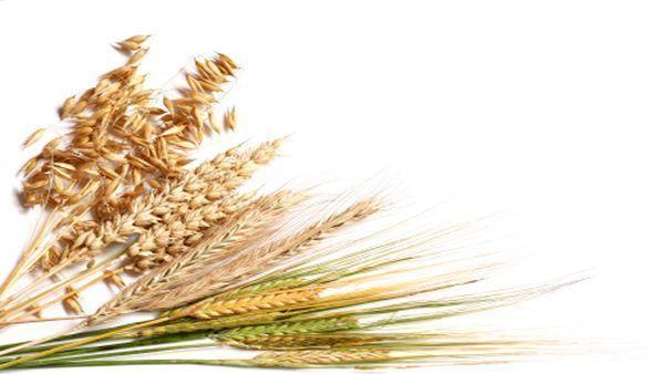 Warum ist Getreide so gesund?