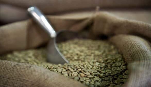 Grüner Kaffee als Diätwunder?