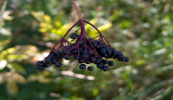 Die Vinotherapie