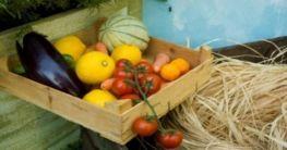 Bio Lebensmittel 2